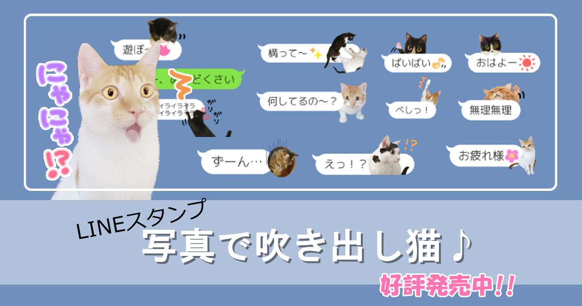 実写猫ちゃんが吹き出しと一緒にメッセージを伝えてくれる♪LINEスタンプのご紹介